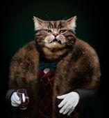 Arogantní sofistikované oblečená kočka šéfa dívá s opovržením