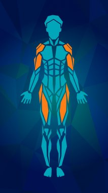 Polygonal anatomy of female muscular system, exercise and muscle guide. Women muscle vector art, front view.
