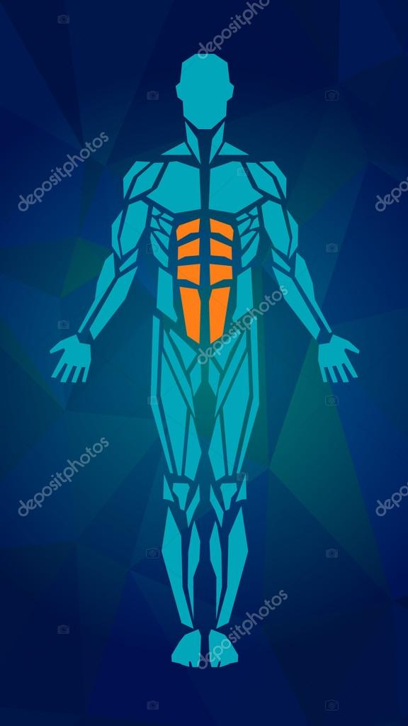 Polygonal anatomy of male muscular system, exercise and muscle guide. Human muscular vector art, front view. Vector illustration