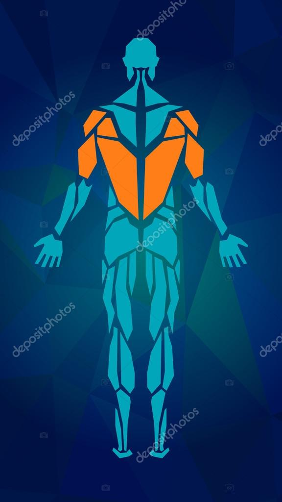 Polygonal anatomy of male muscular system, exercise and muscle guide. Human muscle vector art, back view.