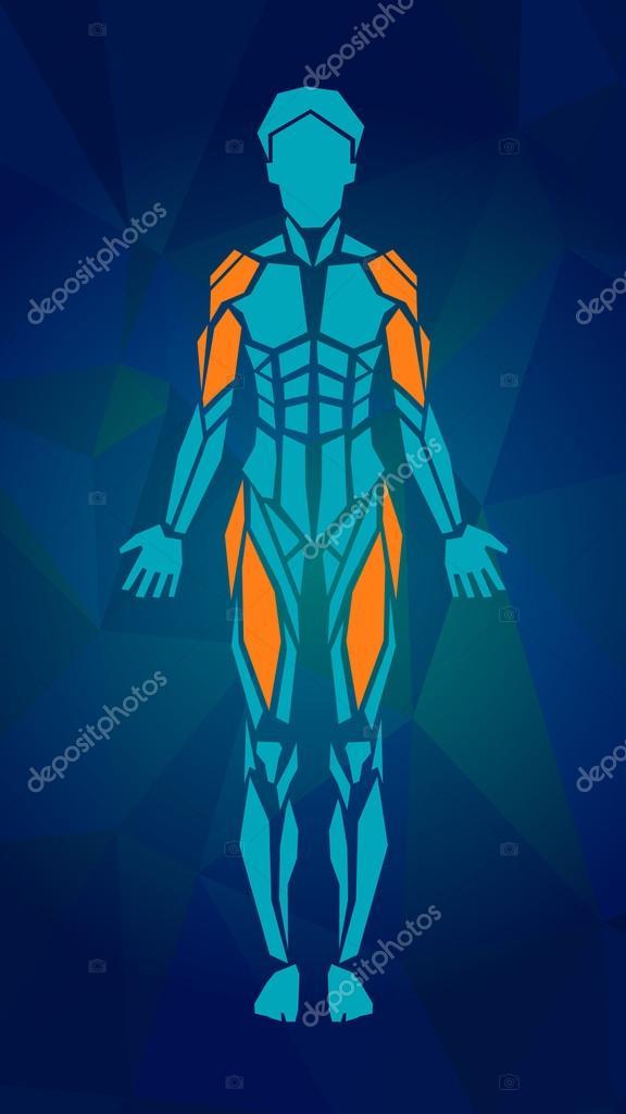 Polygonale Anatomie des weiblichen muskuläre System, Übung und ...