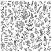 Fotografie Plants and flowers set