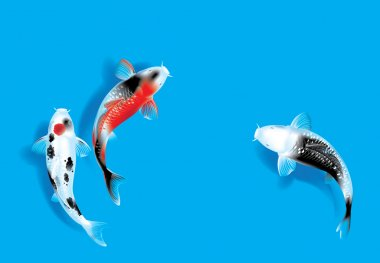 Vector illustration of traditional sacred Japanese Koi carp fish stock vector