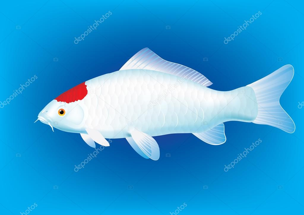 Tancho koi carp stock vector koryaba 121461172 for Carpe koi tancho