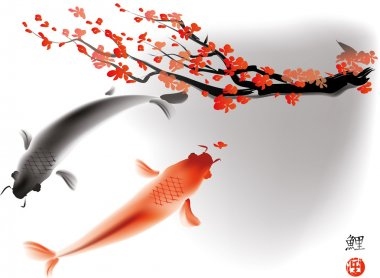 Koi carps and sacura branch