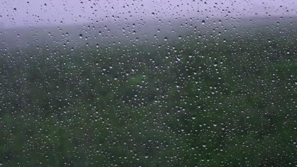 Jarní park se stromem oknem s kapkami vody po dešti, pozadí