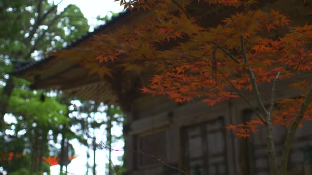 Japonský červený javor listy s chrámem Pagoda v pozadí v Koyasan. Nízký úhel, uzamčeno