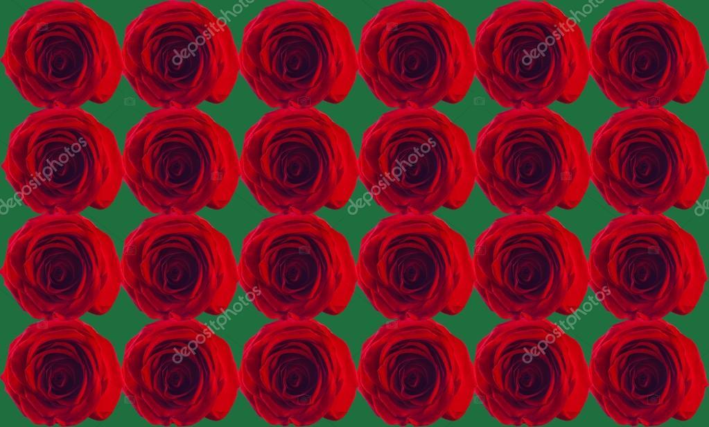 Papel De Parede Rosas Vermelhas Fotografias De Stock