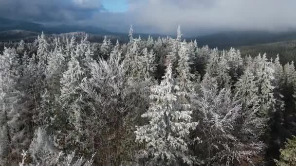 Winterlicher Frost auf den Bäumen. Luftaufnahme von gefrorenem Wald mit schneebedeckten Bäumen im Winter. Flug über den finnischen Winterwald, von oben.