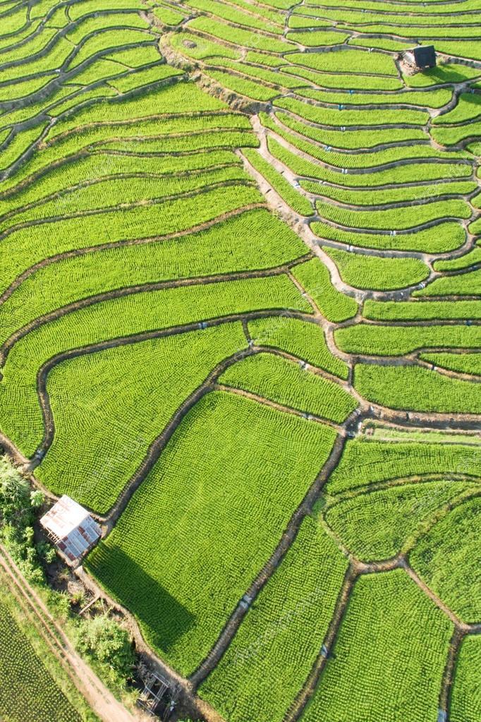 Green Terraced Rice Field in Chiangmai