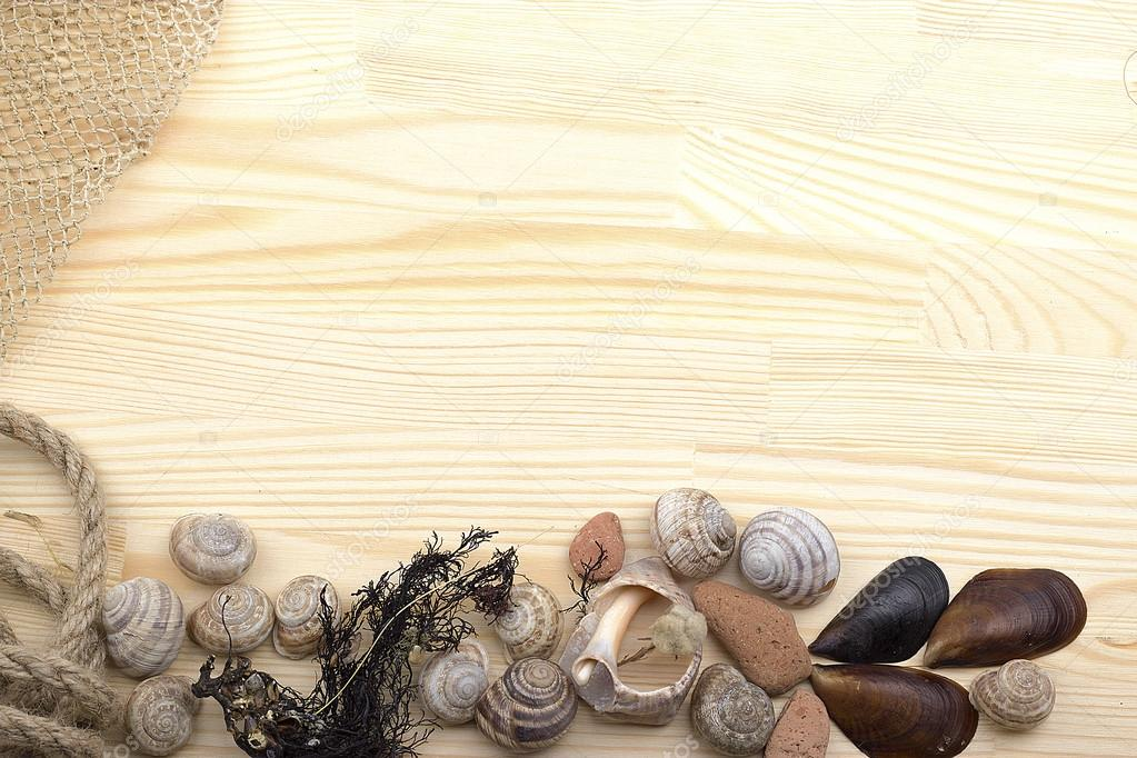 snail on a wooden surface, pebbles, shells, grass, wild flowers,