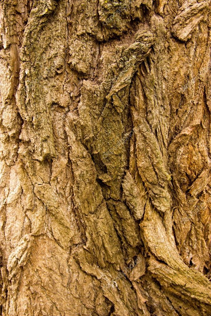 wood, bark, wood structure, cut down a tree
