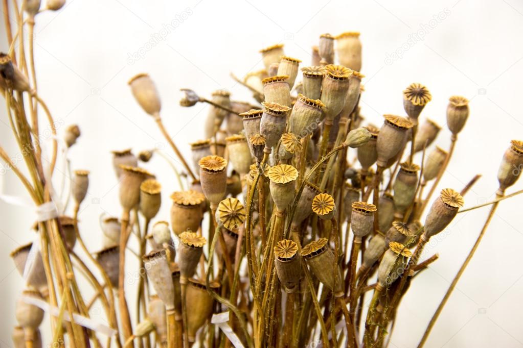 dried herbs, tansy, yarrow, wormwood, poppy, ear