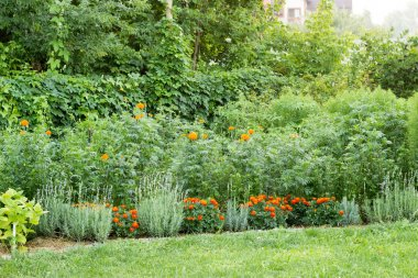 summer garden, planted with asters, high and low marigolds, cale