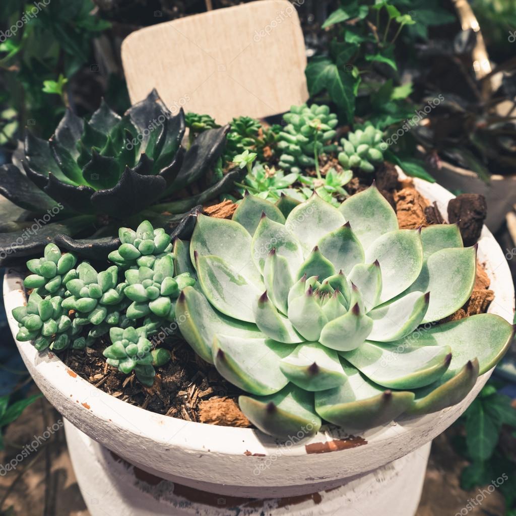 Cactus Succulent plants Arrangement in Bowl home decoration