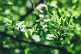 Fotografie Fresh green leaves