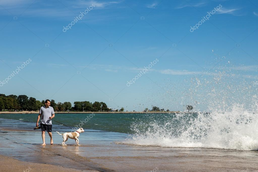 Man walking his dog at Chicago lakeshore north of Oak Street Beach.  Man and dog are looking at Lake Michigan waves crashing ashore.  While Chicago is a large urban area, its extensive lakeshore offers numerous outdoor activities. Editorial Use Only. stock vector