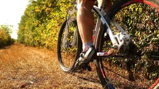 Resultado de imagem para ciclismo floresta