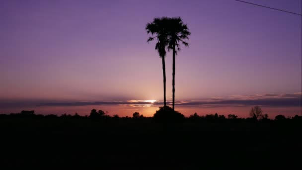 4K, Coconut trees at sunset : Time Lapes