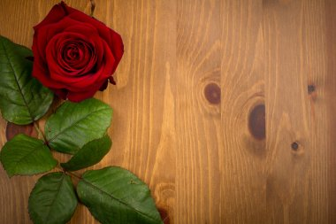 Rose And Leaf On Wood Backgound