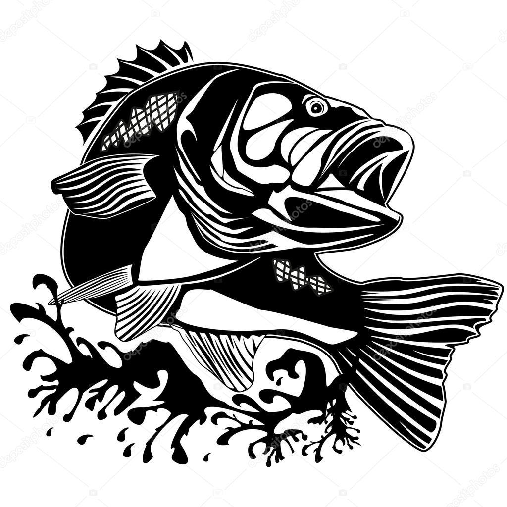 PERCH FISH NEW