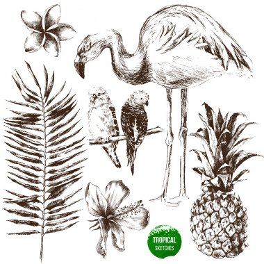 Set of hand drawn tropical plants and birds