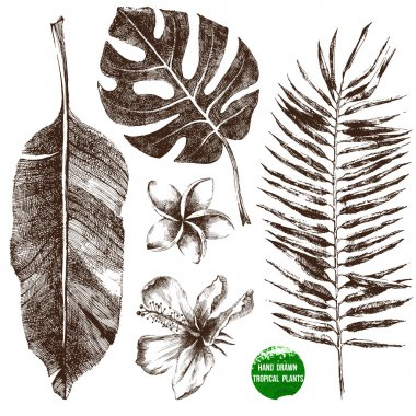 Hand drawn tropical leaves and flowers