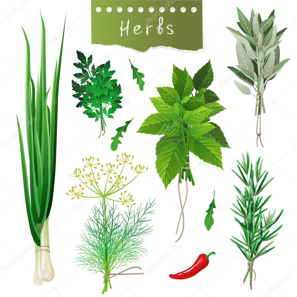 Fresh herbal bunches over white background