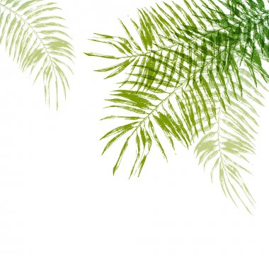 hand drawn palm tree leaves