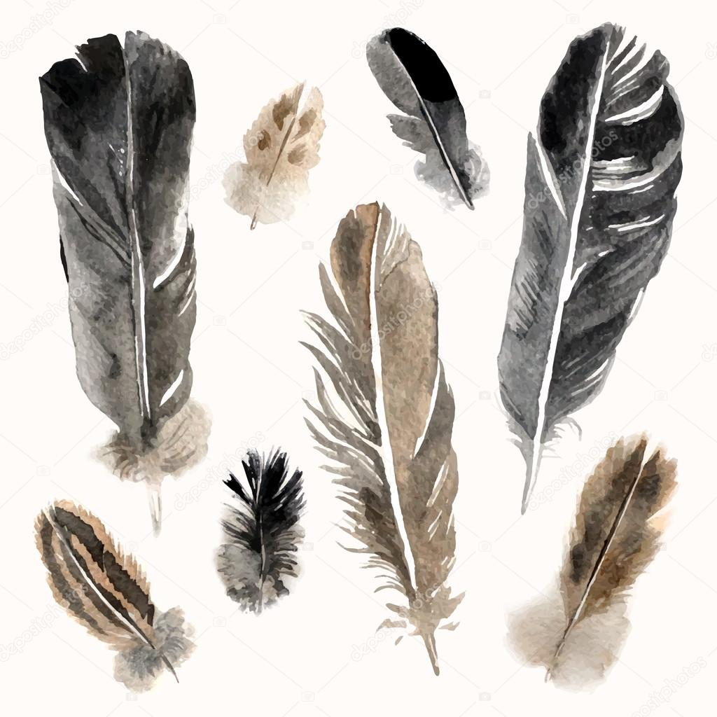 Watercolor feathers set on white background
