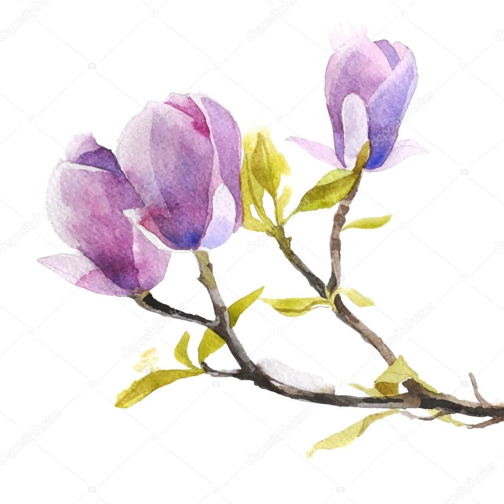 Watercolor magnolia flowers