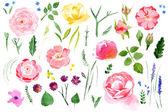 Akvarell virág nyílik a fehér háttér