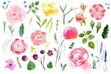 Watercolor flower set over white background
