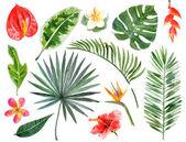disegnato a mano dellacquerello piante tropicali