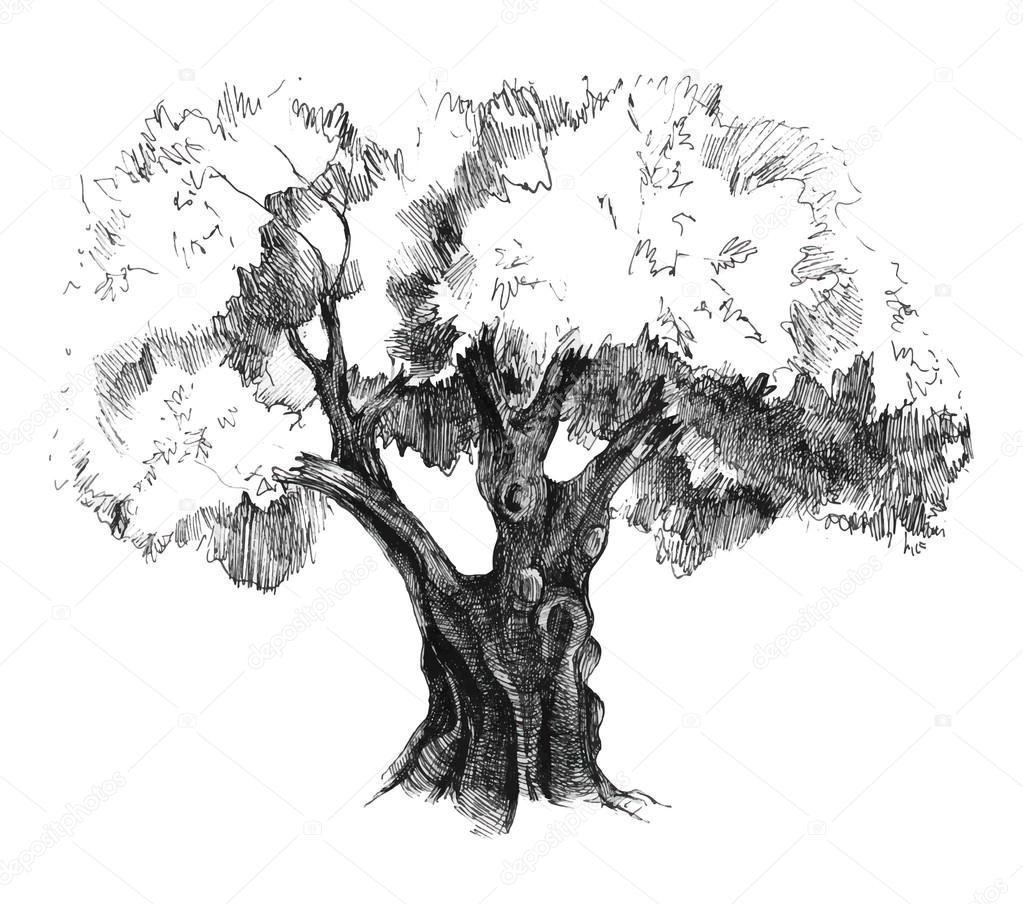 hand drawn olive tree