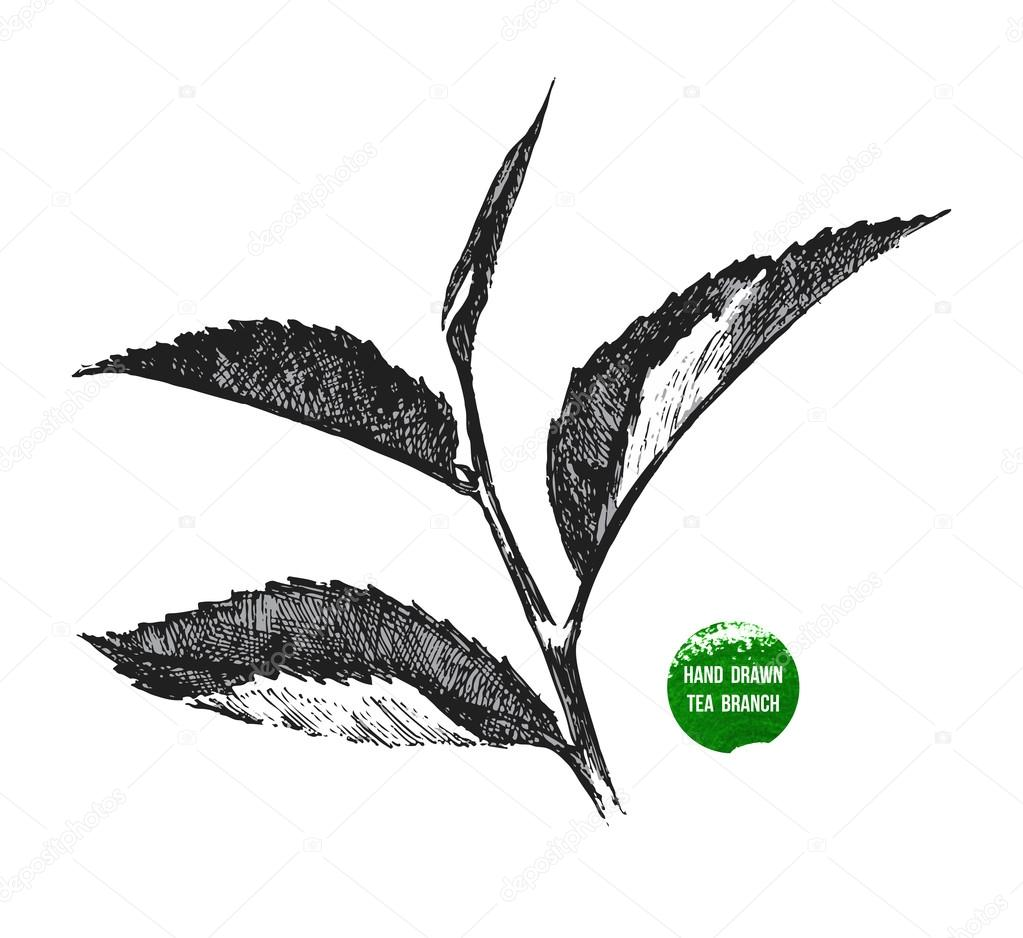 hand drawn tea leaf