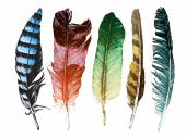 Colorful hand drawn feathers on white background