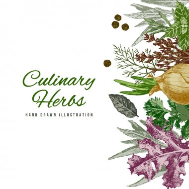 Background with hand drawn culinary herbs and spices stock vector