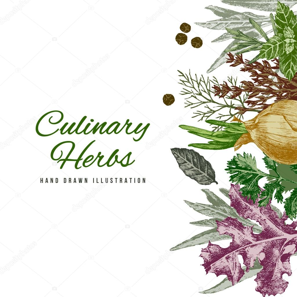 Background with hand drawn herbs and spices