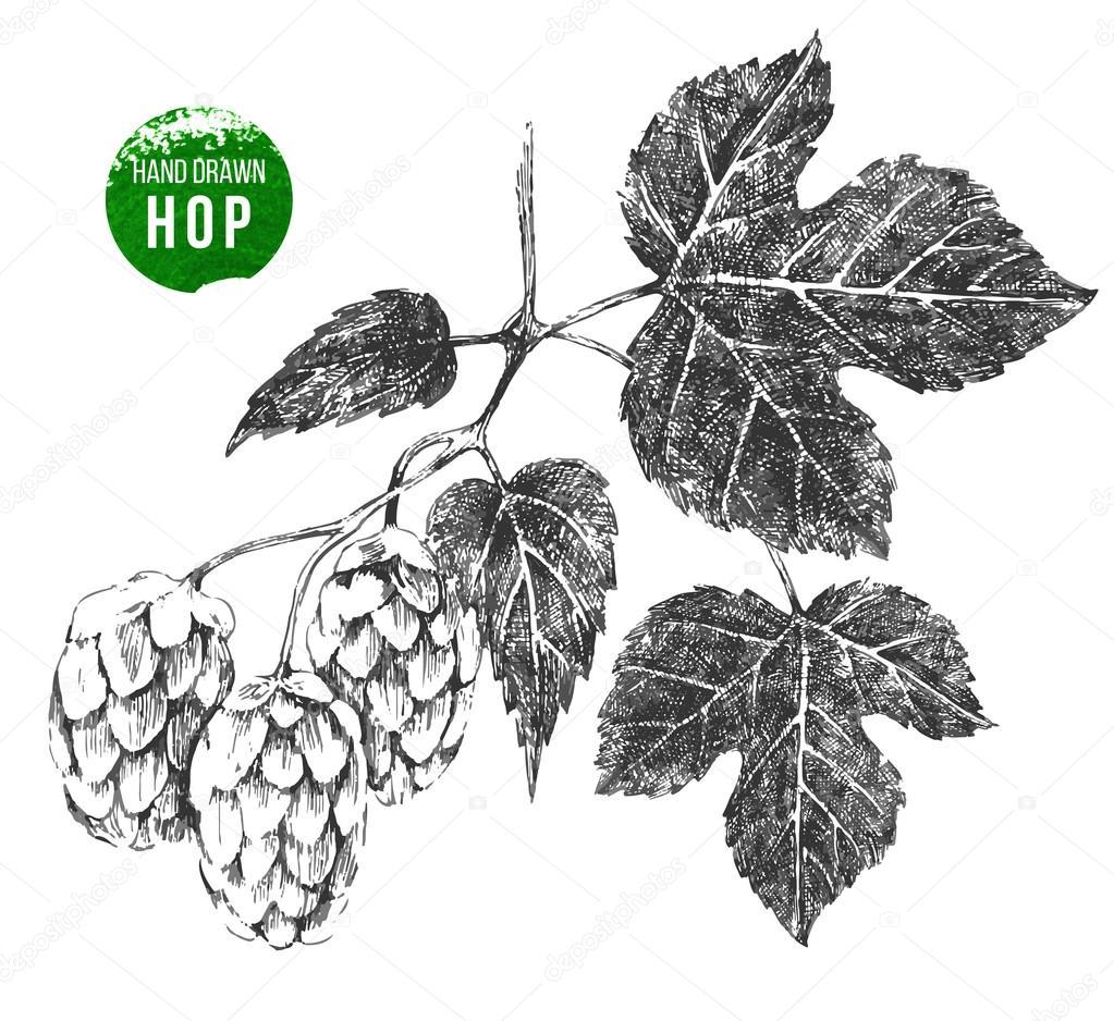 hand drawn hop brunch