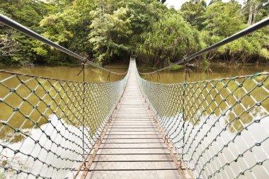 Rope bridge in a jungle
