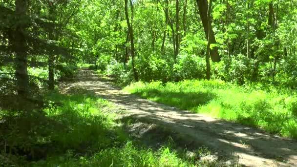 Lesní cesta na jaře slunečný den