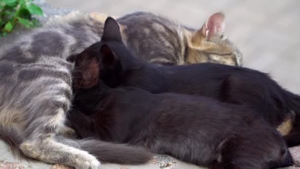 Zwei Kätzchen von einer Katze füttern