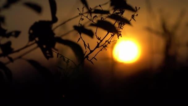 Bei Sonnenuntergang die Umrisse von einem Ast