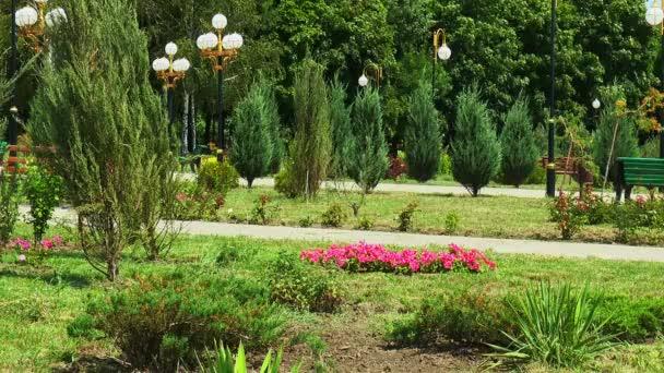 Jedle avenue a záhonu v městském parku