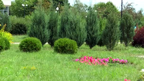 Zelený trávník s záhon červené květy