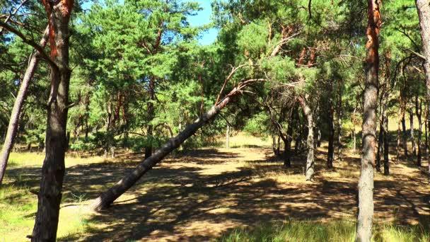 padlý strom v lese