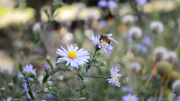 Včela létá na květ
