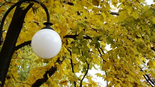 Laterne auf einem Hintergrund aus Herbstblättern