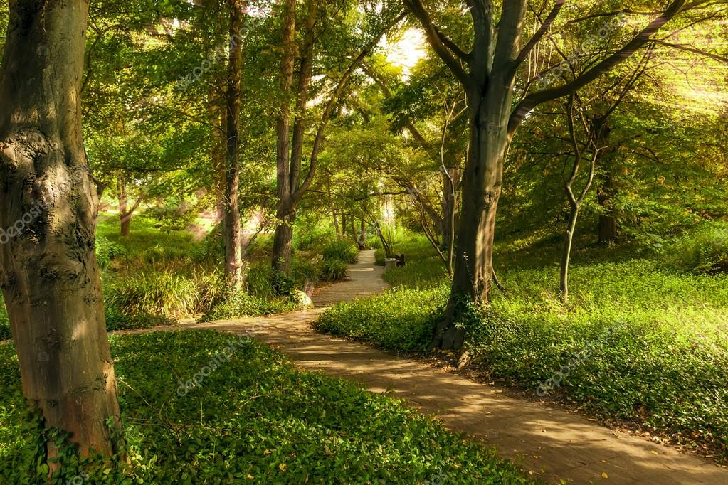 Фотообои Road in a beautiful forest in the morning